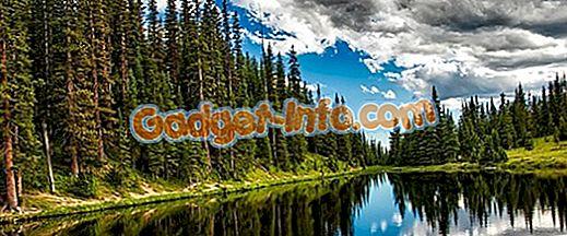 Perbezaan Antara Hutan Evergreen dan Desiduous