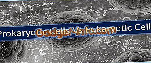 био разлике: Разлика између прокариотских ћелија и ћелија еукариота