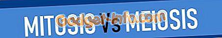 био разлике: Разлика између митозе и мејозе