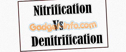 الاختلافات الحيوية: الفرق بين النترتة ونتروجين النتروجين