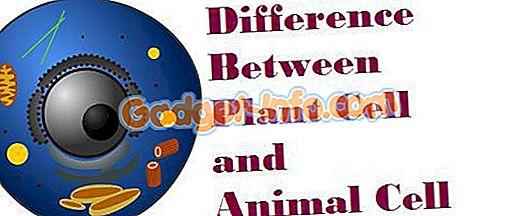 Bio Unterschiede - Unterschied zwischen pflanzlichen und tierischen Zellen
