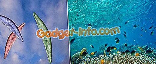 Diferença entre fitoplâncton e zooplâncton