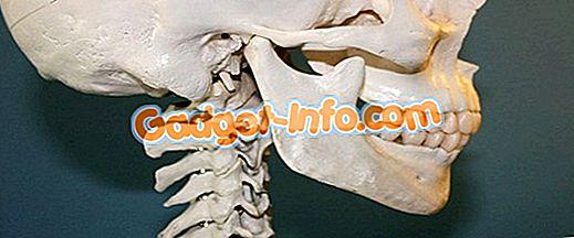 био различия: Разлика между костите и хрущялите