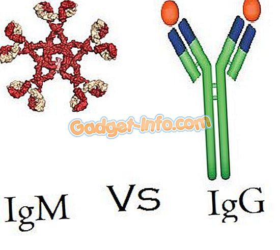 Forskel mellem IgM og IgG