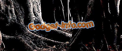 Разница между корнем крана и волокнистым (авантюрным) корнем