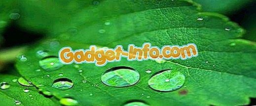 Bio Unterschiede: Unterschied zwischen Chlorophyll und Chloroplasten