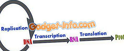 diferențe bio - Diferența dintre replicare și transcriere