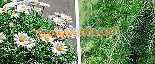 Skillnaden mellan Angiosperms och Gymnosperms