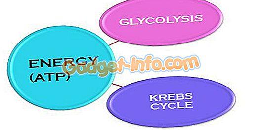 bioerot - Ero glykolyysi- ja Krebs (sitruunahappo) -syklin välillä