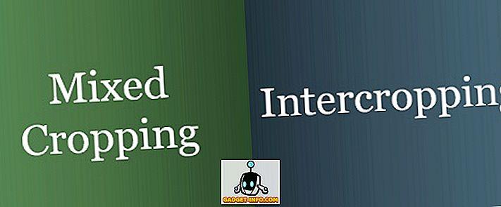 Perbezaan Antara Tanaman Campuran dan Intercropping