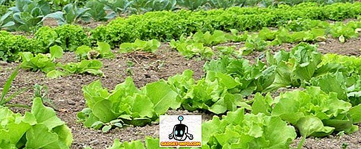 Różnica między poziomem utrzymania a rolnictwem komercyjnym
