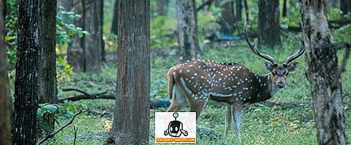 Différence entre le sanctuaire de la faune et le parc national