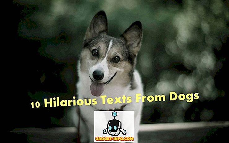 pramogos - Ką daryti, jei šunys galėtų tekstas?  10 linksmų tekstų iš šunų