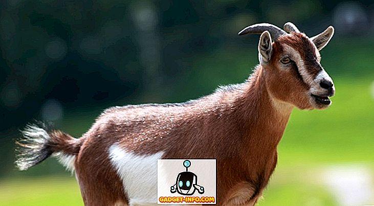 Als die Nachfrage nach Ziegen auf Bakra Eid stieg, begannen die Leute mit dem Verkauf von OLX
